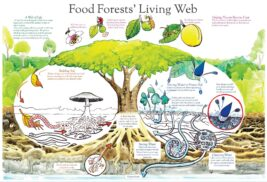 Food Forest Living Web